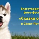 Благотворительный-фестиваль-«Сказки-о-хаски»-в-Санкт-Петербурге-900x408
