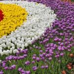 Фестиваль тюльпанов в ЦПКО