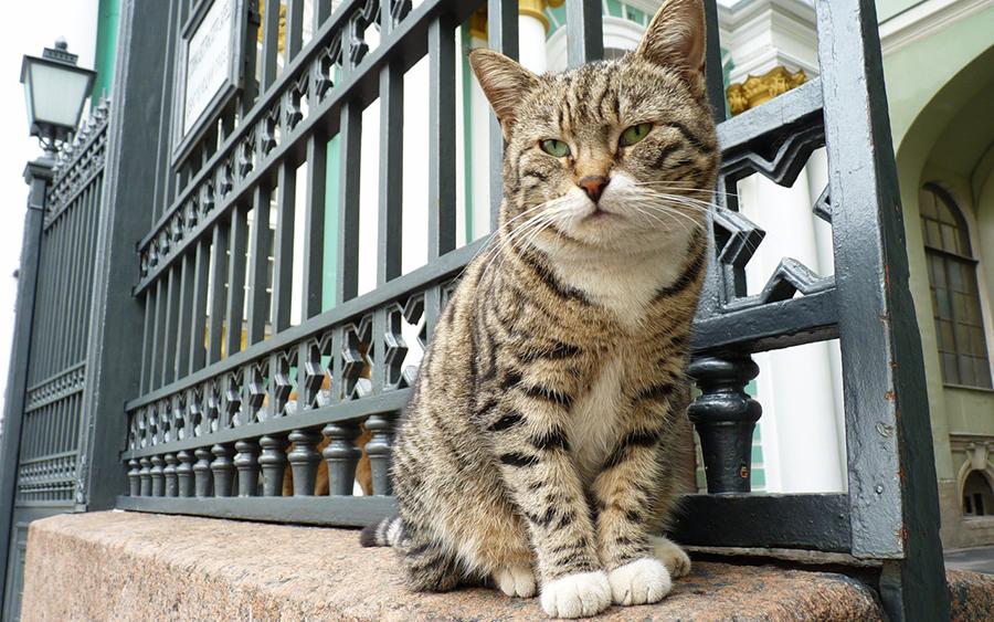 День петербургских котов