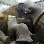 Зоологический музей Зоологического института
