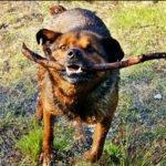 Как умирала моя собака в клинике Доктора Сотникова